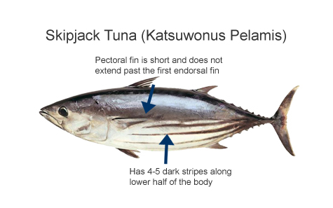 Skipjack Price Indication