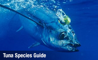 Tuna Species Guide